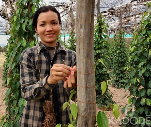 Farmer in her Kampot pepper plantation